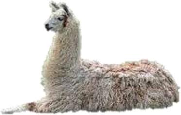 Antigen immunotherapy Llama